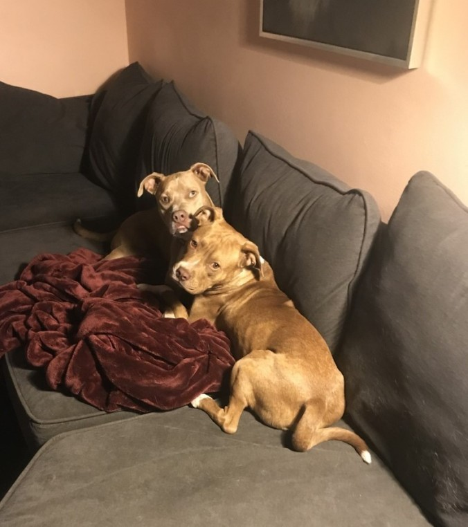 Two Pitties